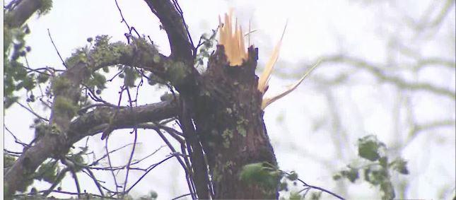 Alabama storm damage_1539267638892.JPG-873774424.jpg